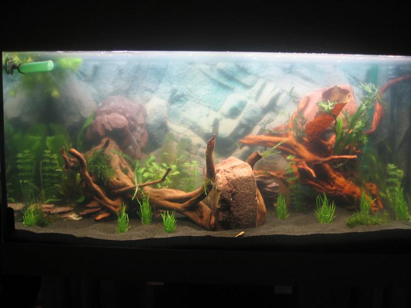 meerwasser aquarium einfahren wasser tr b aquarium wasser tr b nach neueinrichtung u zuhause. Black Bedroom Furniture Sets. Home Design Ideas