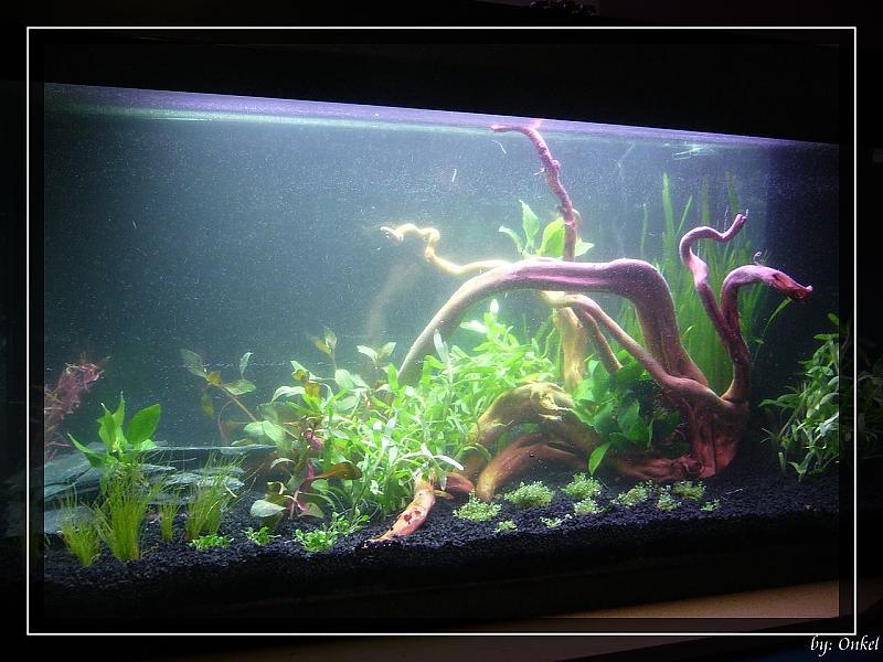 rooky nature in 112 liter aquarium forum. Black Bedroom Furniture Sets. Home Design Ideas