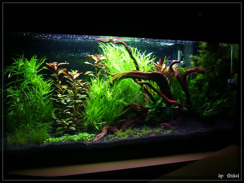 u0026quot;Rooky Nature u0026quot; in 112 Liter   Seite 3   Aquarium Forum