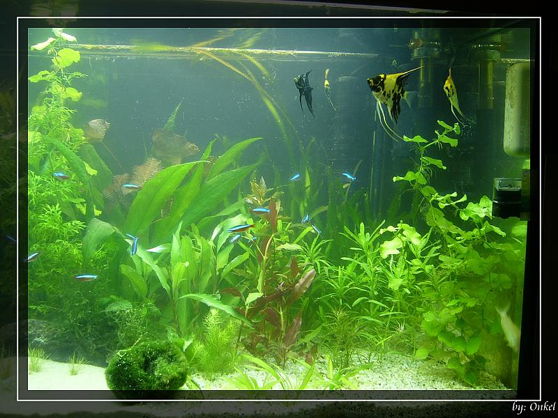 mein 300l aqua seite 12 aquarium forum. Black Bedroom Furniture Sets. Home Design Ideas