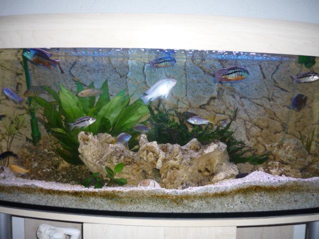 Mein 240l Malawibecken Aquarium Forum