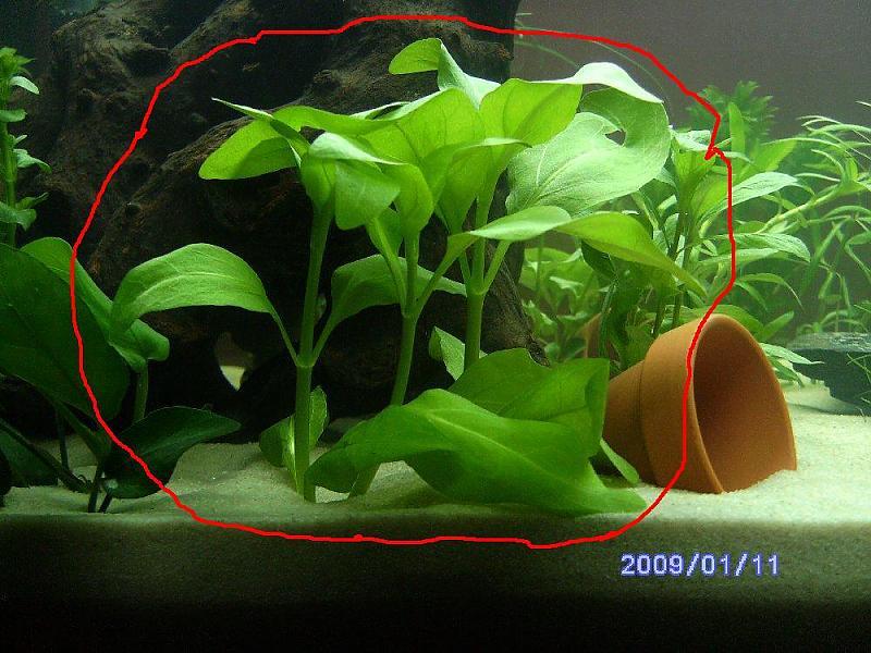 Wer hat erfahrungen mit ikea wasserpflanzen seite 3 for Wasserpflanzen ikea