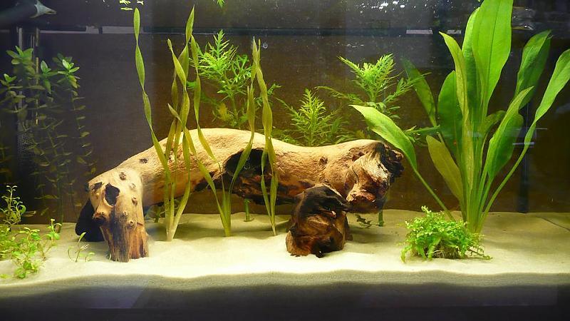 Bis 54l vorstellung 54 l aquarium aquarium forum for Aquarium einrichtungsideen