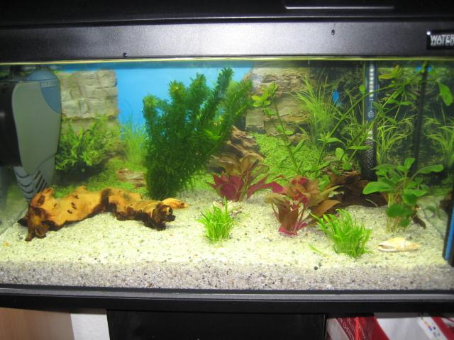 Mein erstes 54L AQ   Aquarium Forum
