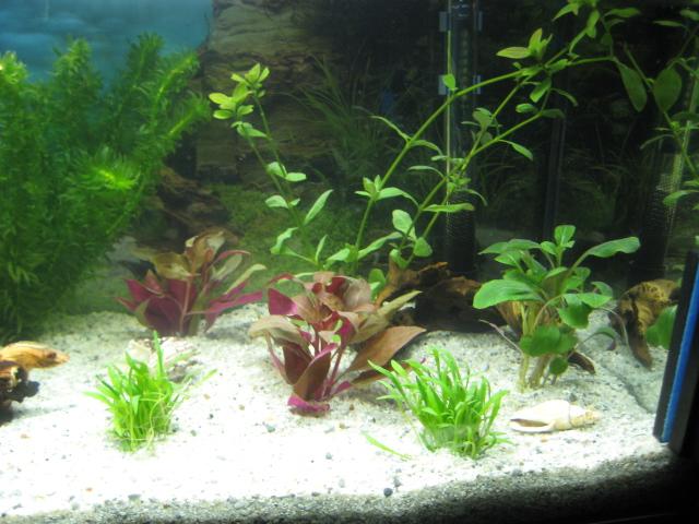 mein erstes 54l aq aquarium forum. Black Bedroom Furniture Sets. Home Design Ideas