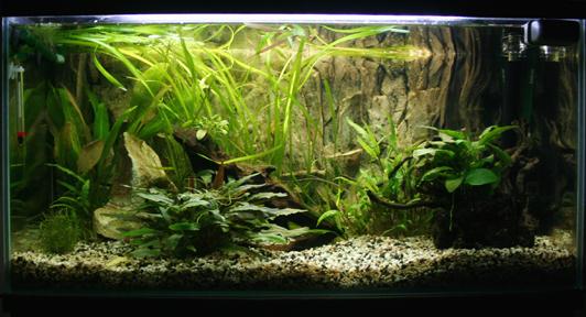 bis 200l 100l was eignet sich aquarium forum. Black Bedroom Furniture Sets. Home Design Ideas