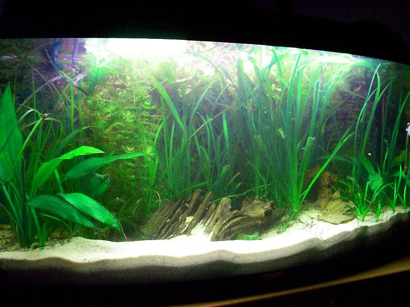 meine beiden becken 54l 100l aquarium forum. Black Bedroom Furniture Sets. Home Design Ideas