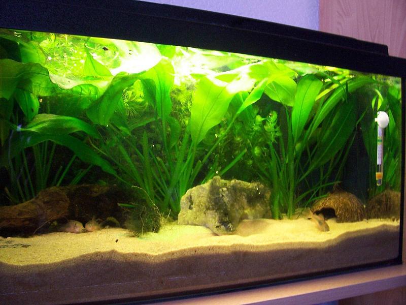 Meine beiden becken 54l 100l aquarium forum for Aquarium einrichtungsideen