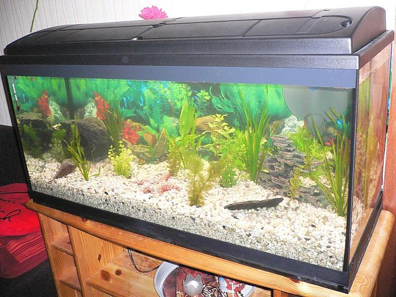 mein erstes aquarium 180 liter aquarium forum. Black Bedroom Furniture Sets. Home Design Ideas