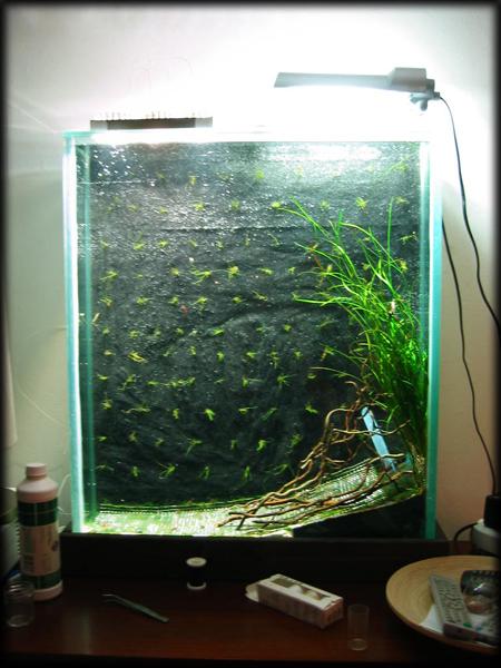 die garnelenwand vase die 2te seite 3 aquarium forum. Black Bedroom Furniture Sets. Home Design Ideas