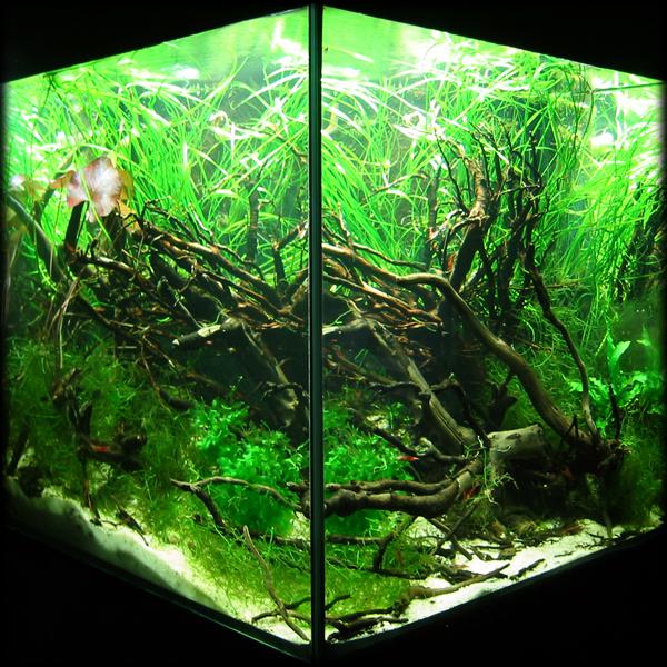 terrarium h hle chinchilla bambus holz 17x5cm rennm use unterschlupf wurzel unterschlupf eb. Black Bedroom Furniture Sets. Home Design Ideas