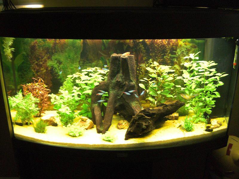 mein juwel vision 180 aquarium forum. Black Bedroom Furniture Sets. Home Design Ideas