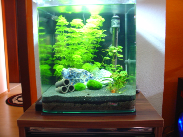 altbauwohnung trifft nano cube seite 2 aquarium forum. Black Bedroom Furniture Sets. Home Design Ideas