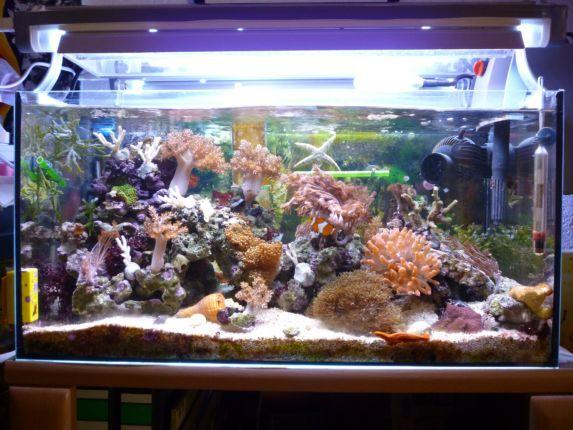 mein 54 liter nano riff aquarium forum. Black Bedroom Furniture Sets. Home Design Ideas
