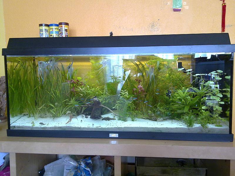 mein 180 liter s damerika becken aquarium forum. Black Bedroom Furniture Sets. Home Design Ideas
