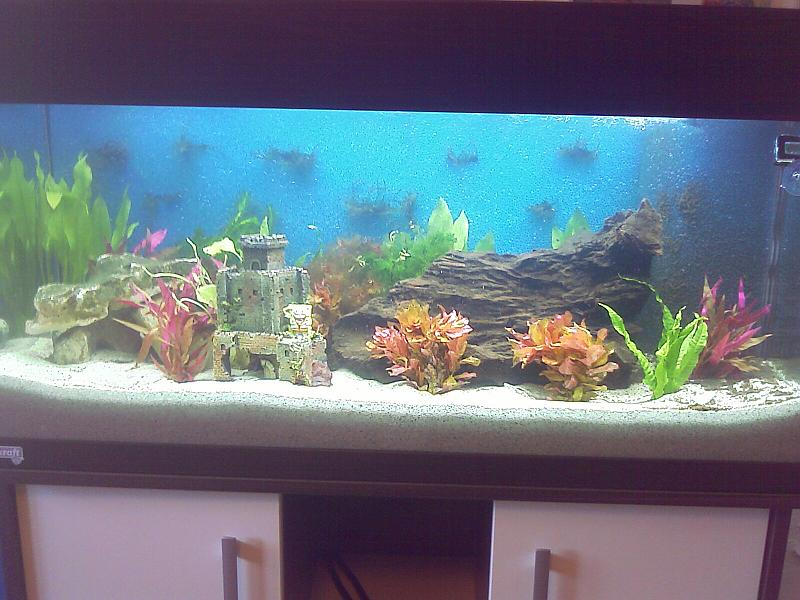 mein aquarium einstieg mit 180l aquarium forum. Black Bedroom Furniture Sets. Home Design Ideas