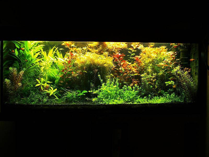 240 liter aquarium einrichten