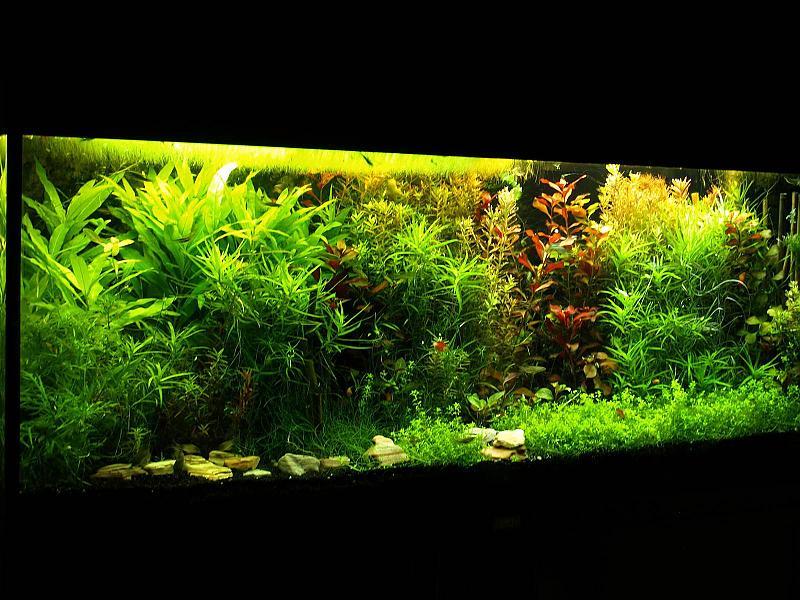 240 Liter Mein Buschpflanzenaquarium Seite 9 Aquarium Forum