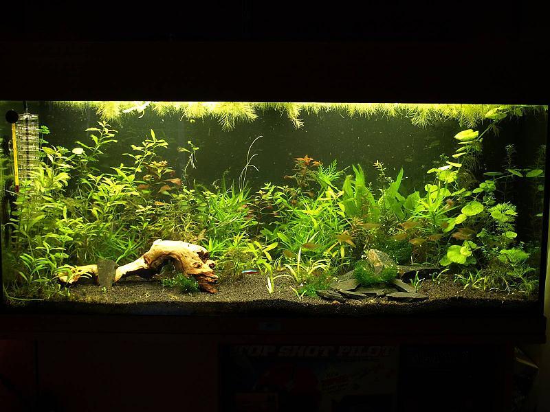 180 liter mein schwarzes pflanzenaquarium seite 8 aquarium forum. Black Bedroom Furniture Sets. Home Design Ideas