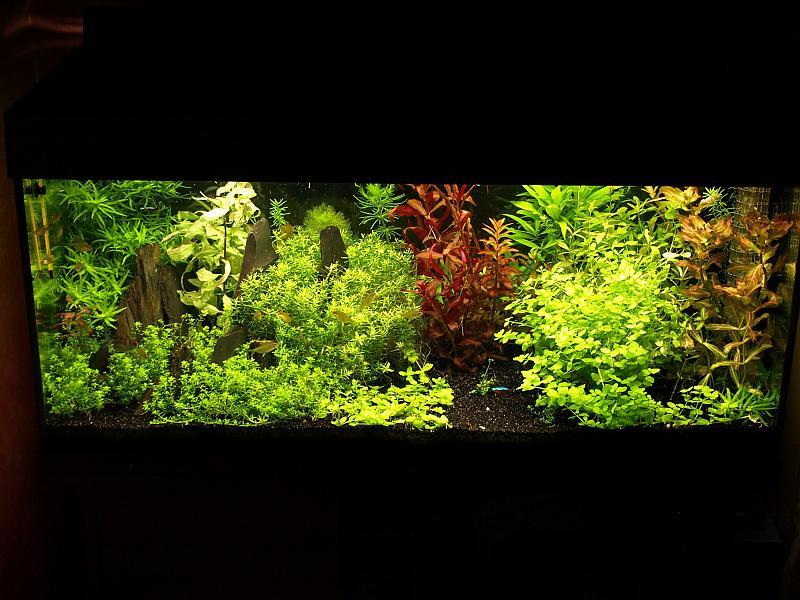 180 liter mein schwarzes pflanzenaquarium seite 12 aquarium forum. Black Bedroom Furniture Sets. Home Design Ideas