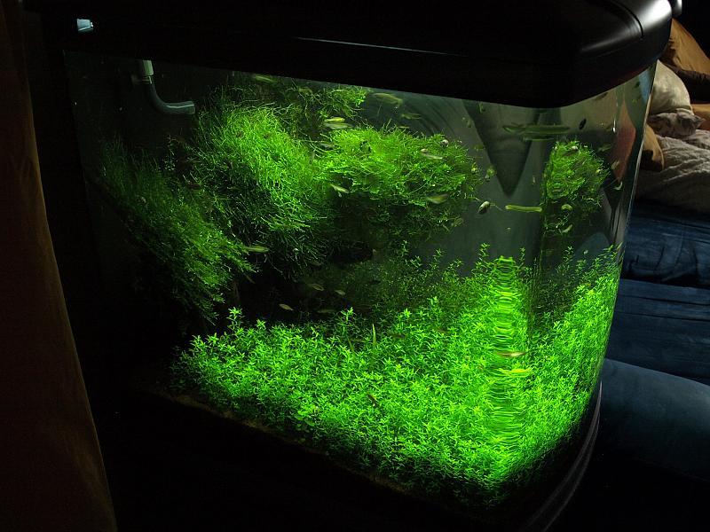 mein sera biotop cube 130 xxl seite 4 aquarium forum. Black Bedroom Furniture Sets. Home Design Ideas