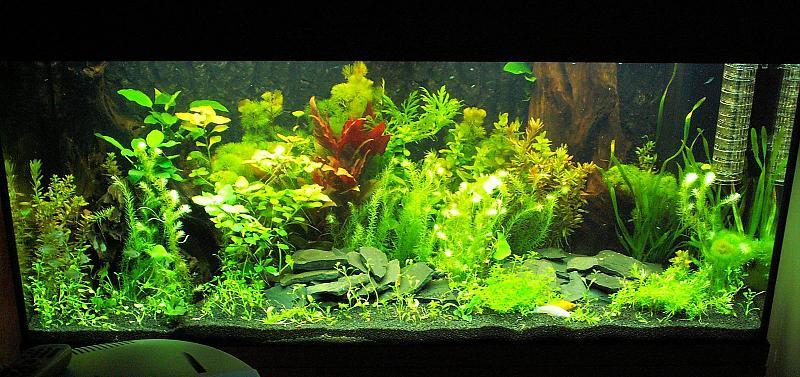 180 liter mein schwarzes pflanzenaquarium seite 2. Black Bedroom Furniture Sets. Home Design Ideas