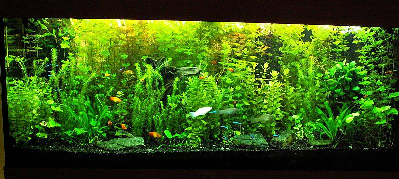 240 liter mein buschpflanzenaquarium seite 2 aquarium forum. Black Bedroom Furniture Sets. Home Design Ideas