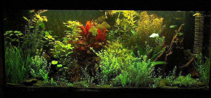 180 liter mein schwarzes pflanzenaquarium seite 3 aquarium forum. Black Bedroom Furniture Sets. Home Design Ideas