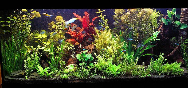 180 liter mein schwarzes pflanzenaquarium seite 4 aquarium forum. Black Bedroom Furniture Sets. Home Design Ideas
