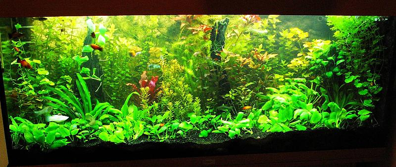 240 liter mein buschpflanzenaquarium seite 3 aquarium forum. Black Bedroom Furniture Sets. Home Design Ideas
