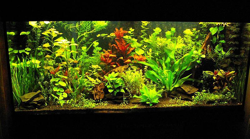 180 liter mein schwarzes pflanzenaquarium seite 4. Black Bedroom Furniture Sets. Home Design Ideas