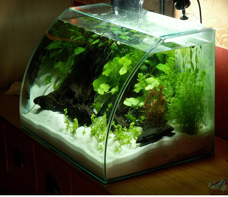 40 liter wei er strand aquarium forum. Black Bedroom Furniture Sets. Home Design Ideas