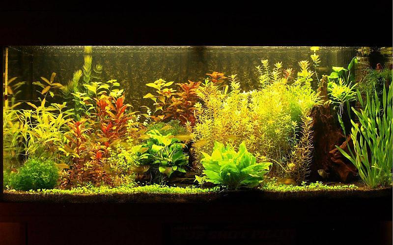 180 liter mein schwarzes pflanzenaquarium seite 6. Black Bedroom Furniture Sets. Home Design Ideas