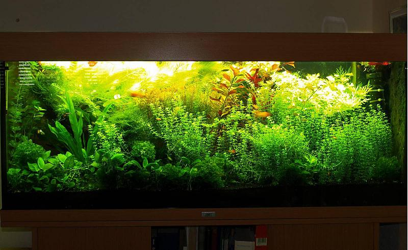 240 liter mein buschpflanzenaquarium seite 5 aquarium forum. Black Bedroom Furniture Sets. Home Design Ideas