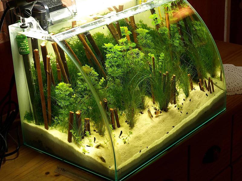 40 liter wei er strand seite 2 aquarium forum. Black Bedroom Furniture Sets. Home Design Ideas
