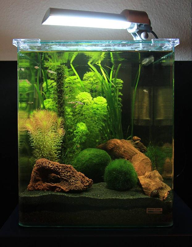 30l nano cube von dennerle aquarium forum. Black Bedroom Furniture Sets. Home Design Ideas
