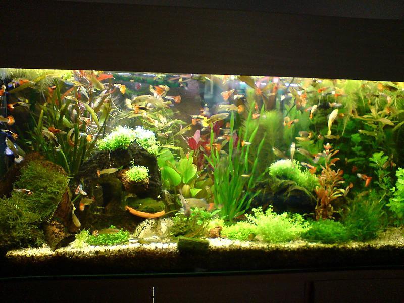 Mein 160 liter guppybecken aquarium forum for Aquarium einrichtungsideen