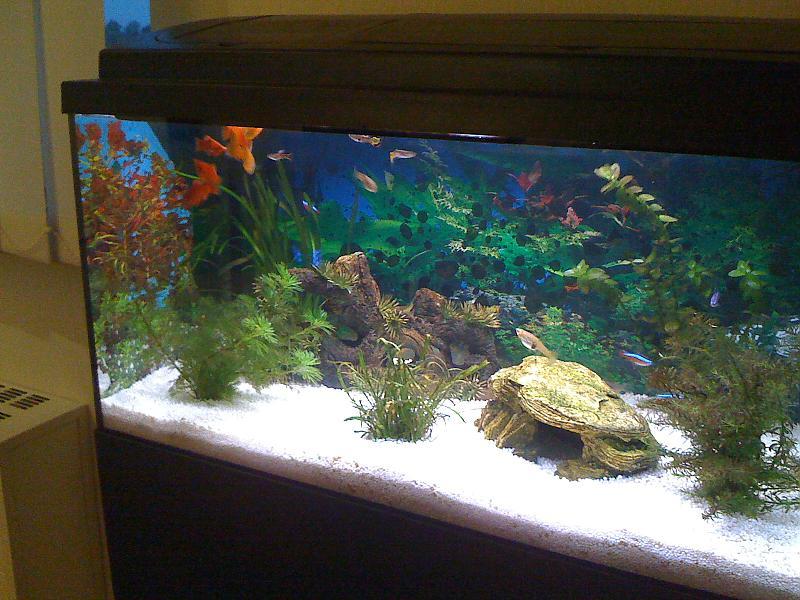 schwarze folie aquarium