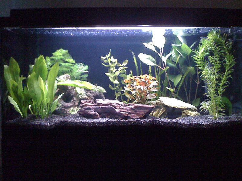 mein neues 54 l aquarium aquarium forum. Black Bedroom Furniture Sets. Home Design Ideas