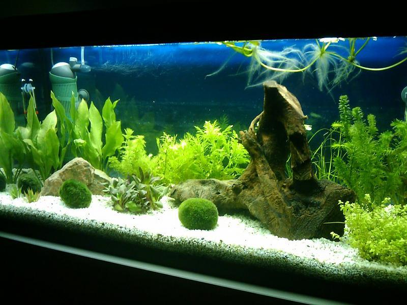 180 liter s damerika anf ngerbecken aquarium forum. Black Bedroom Furniture Sets. Home Design Ideas