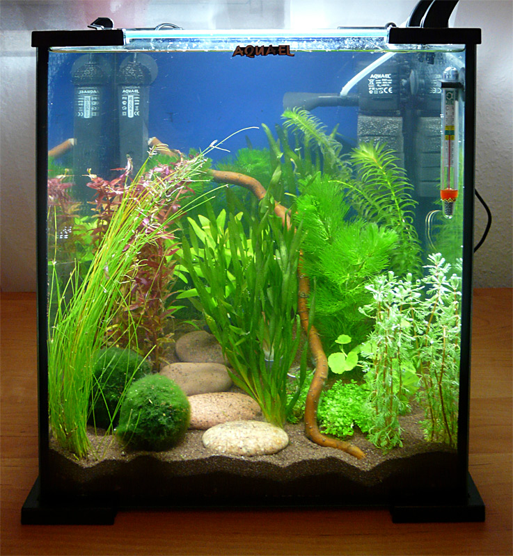 Aquael shrimp set for Shrimp fish tank