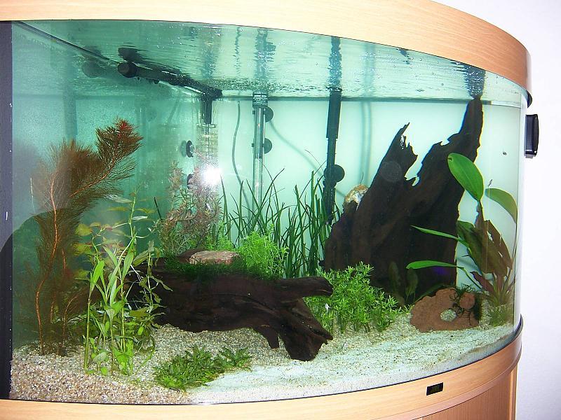 ber 200l 350l wollen bev lkert werden aquarium forum. Black Bedroom Furniture Sets. Home Design Ideas