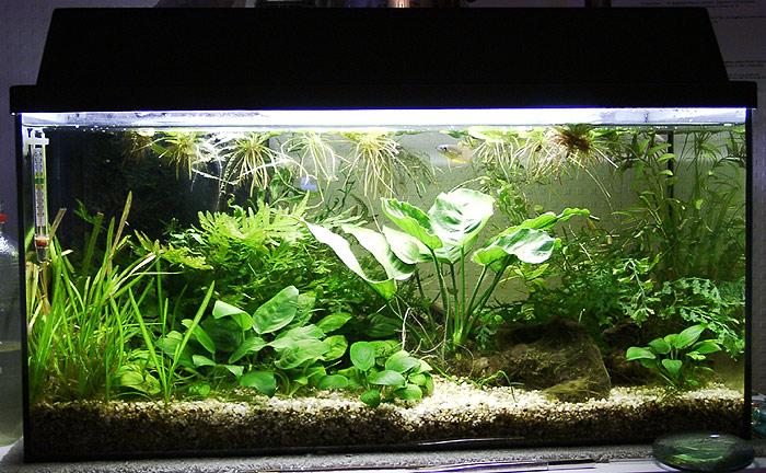 Mein 54l Aquarium   Aquariumforum de  Bildergalerie