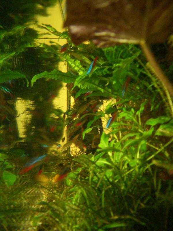 300 l aq raumteiler seite 8 aquarium forum. Black Bedroom Furniture Sets. Home Design Ideas