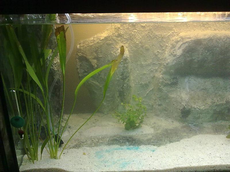 meine landschaft eigenbau seite 2 aquarium forum. Black Bedroom Furniture Sets. Home Design Ideas