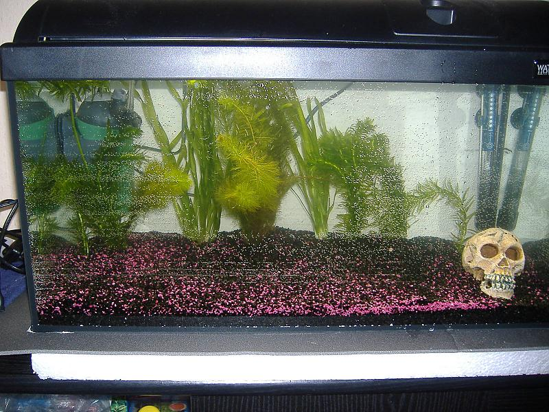 54 liter heute eingerichtet aquarium forum for Waterhome aquarium