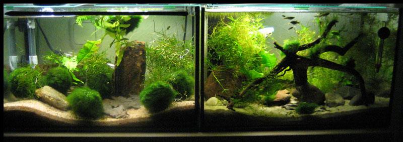 2 x 25 liter aquarium forum for Aquarium heizung