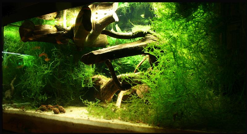 und noch ein paar 60er becken aquarium forum. Black Bedroom Furniture Sets. Home Design Ideas