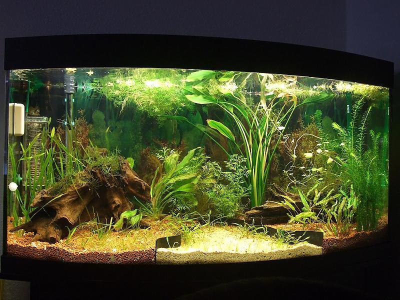 260 liter aquarium neueinrichtung besatz aquarium forum. Black Bedroom Furniture Sets. Home Design Ideas