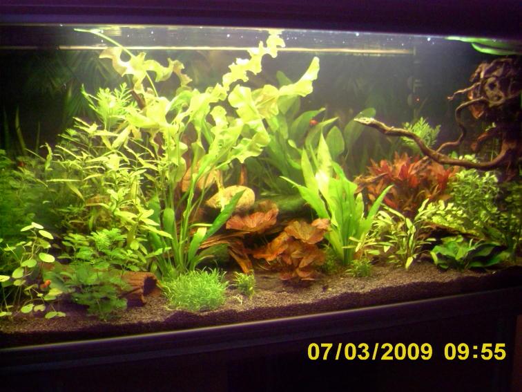 mein wasser hat einen wei lichen schimmer aquarium forum. Black Bedroom Furniture Sets. Home Design Ideas